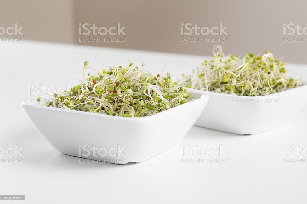 Organic Broccoli Sprouts in Bowls royalty-free stock photo