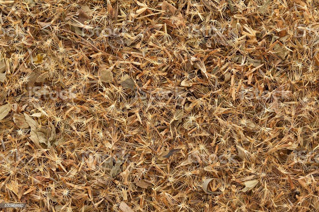 Organic Candyleaf (Stevia rebaudiana) seeds. stock photo