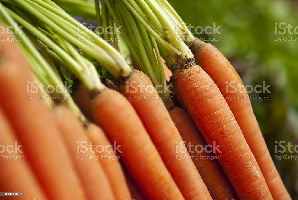 Organic Carrots royalty-free stock photo
