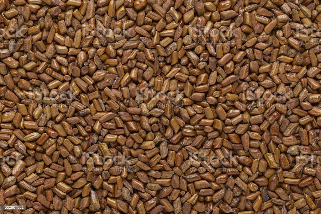 Organic Chinese senna seeds. stock photo