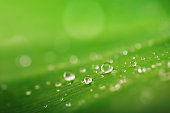 Organic conception, fresh green grass, leaf and water drops back