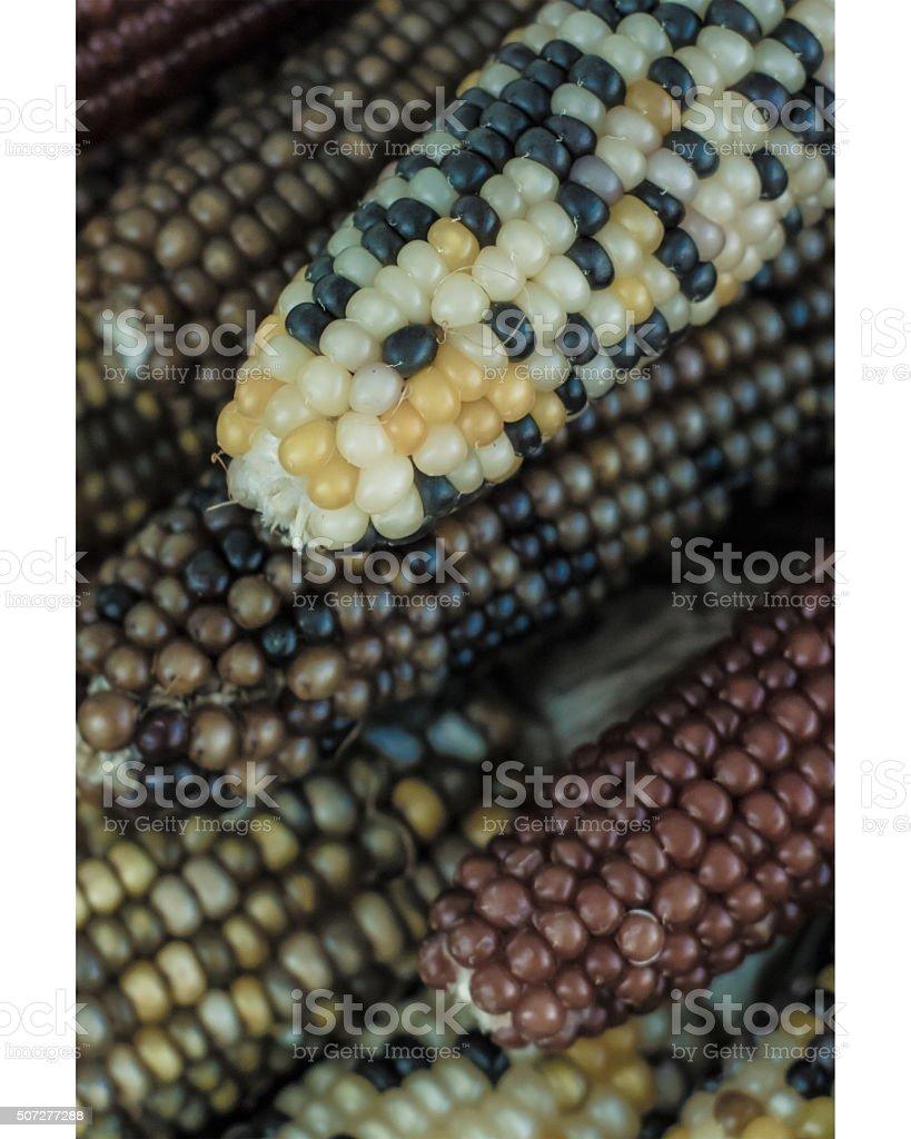 Organic corn close up royalty-free stock photo