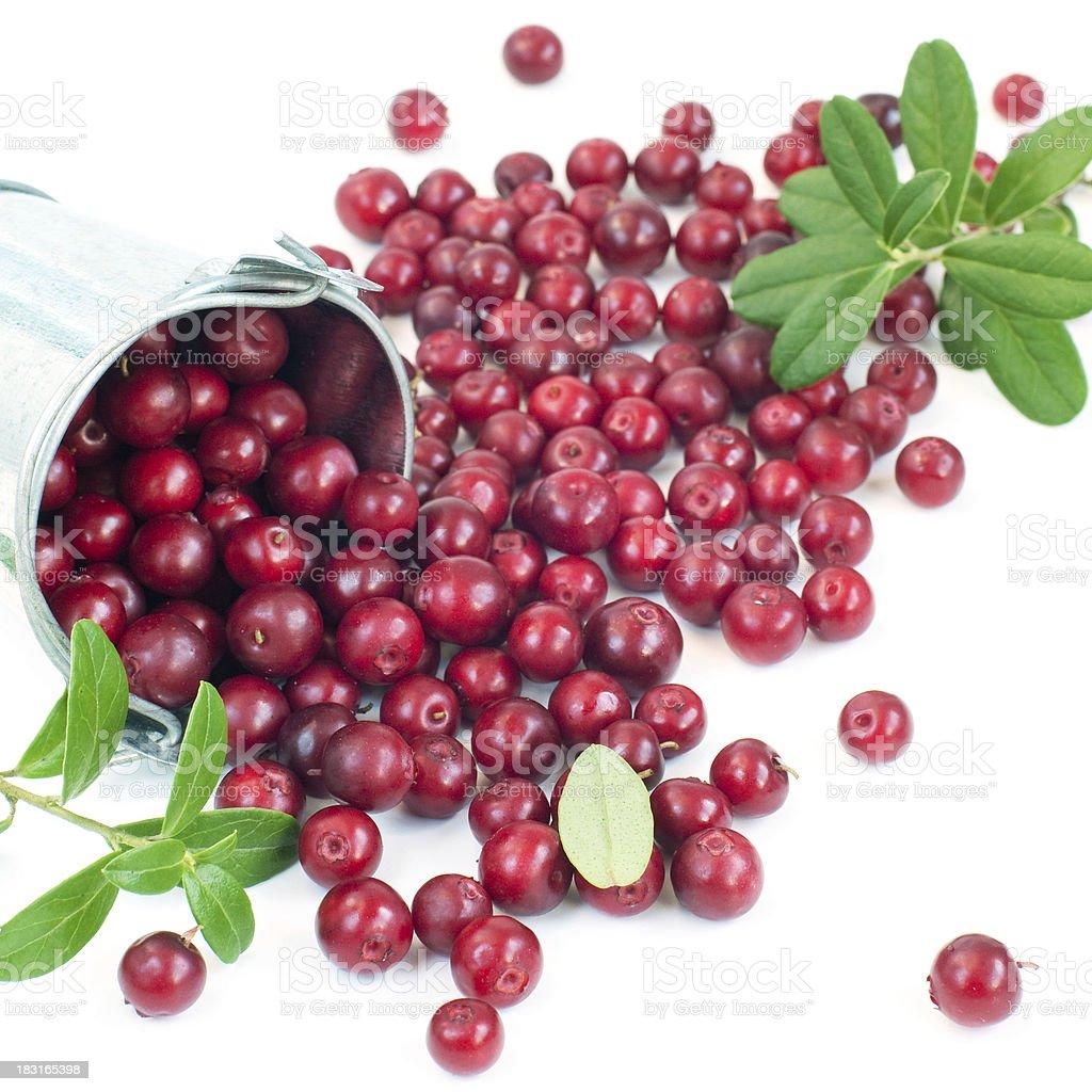 cowberry bio photo libre de droits