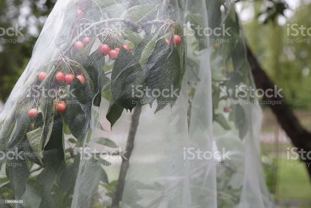 Organic Crop Protection royalty-free stock photo