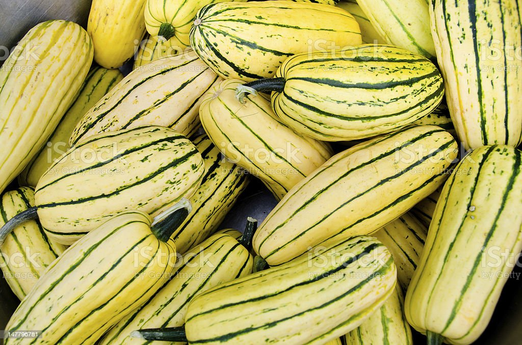 Organic Delicata squash stock photo