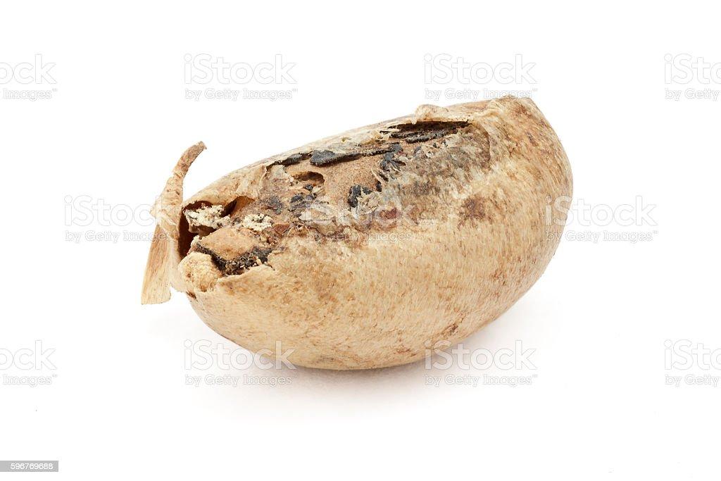 Organic De-shelled Barbados nut (Jatropha curcas) seed. stock photo
