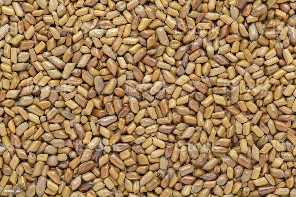 Organic dry Chinese senna (Senna obtusifolia) seeds. stock photo
