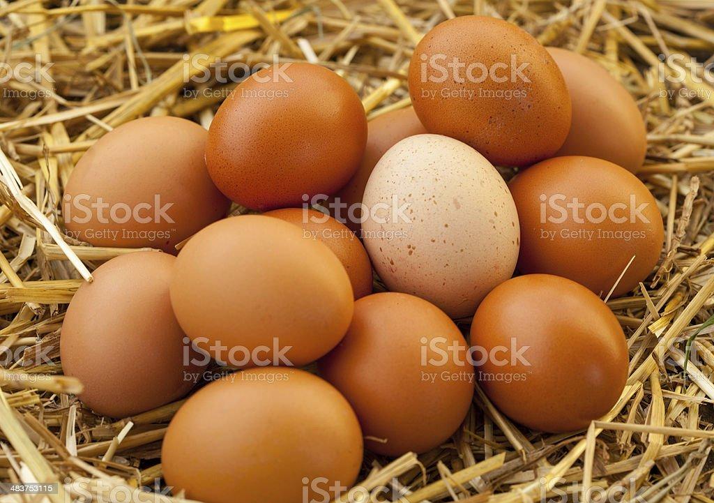 organic eggs in the hay nest stock photo