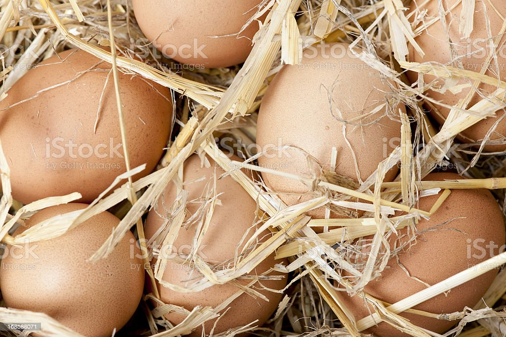 Organic Eggs royalty-free stock photo