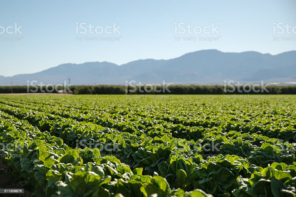Organic Farm Land Crops In California stock photo