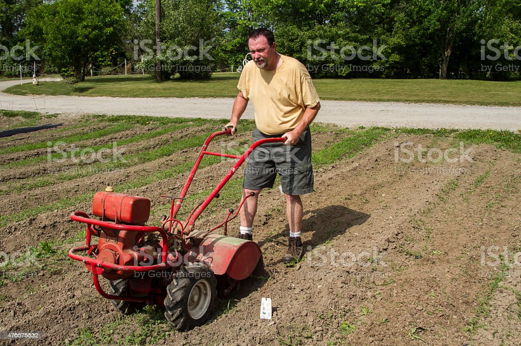 Organic Farmer Cultivating Between Rows In A Hot Sun stock photo
