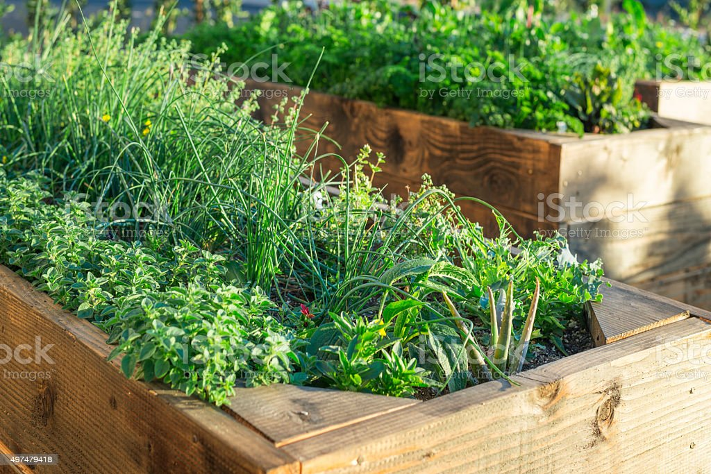 Organic food garden stock photo