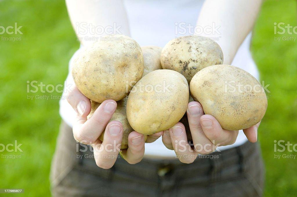 Organic Food royalty-free stock photo