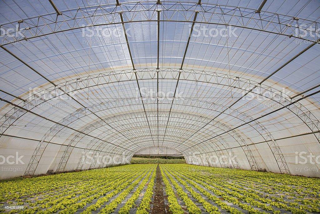 organic food stock photo