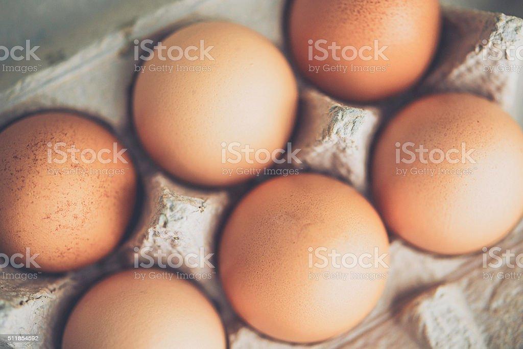 Organic freshly laid eggs in cardboard egg carton stock photo