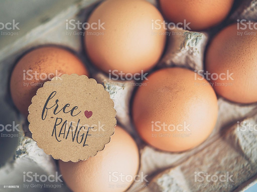 Organic freshly laid free range eggs in cardboard egg carton stock photo