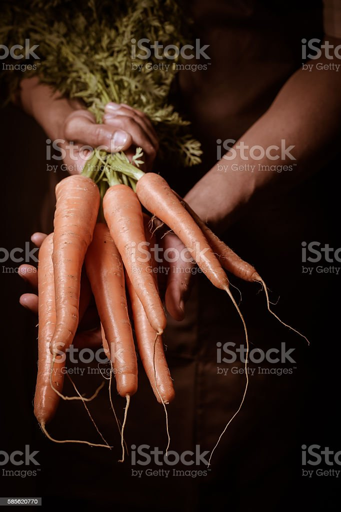 Organic fruit and vegetables. Farmers hands with freshly harvested carrots. stock photo