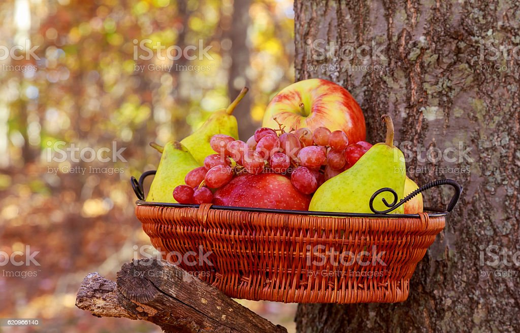 Organic fruit in basket in summer grass. Fresh grapes, stock photo