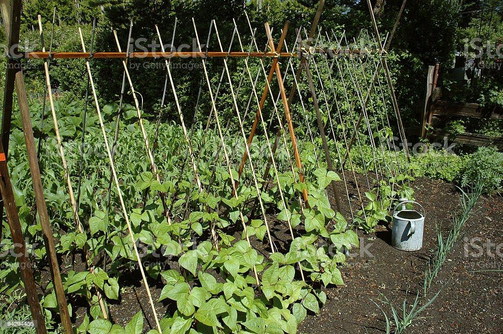Organic gardening stock photo