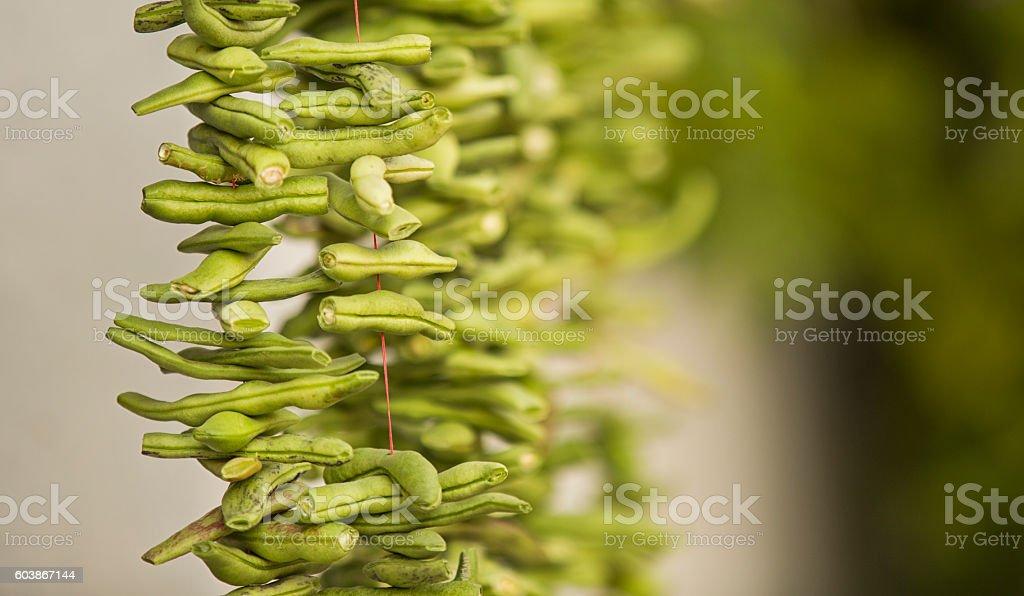 organic green runner beans stock photo