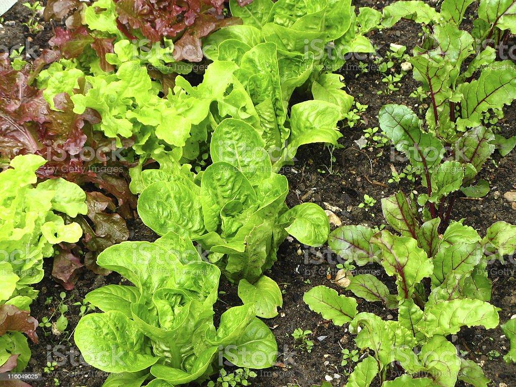 Organic green salad stock photo
