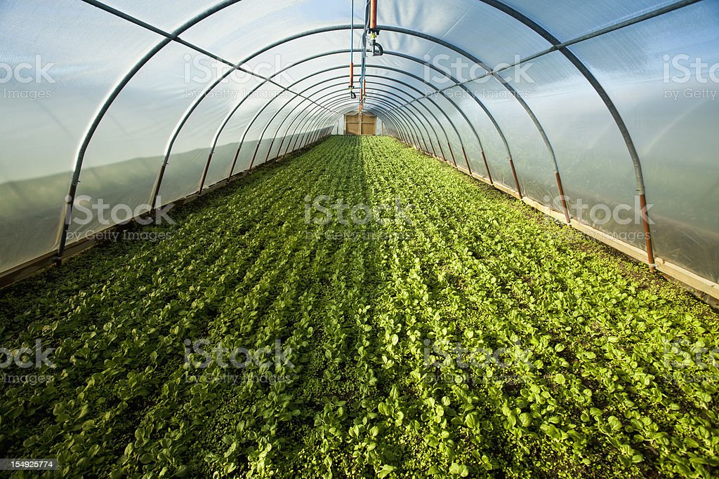 Organic greenhouse stock photo