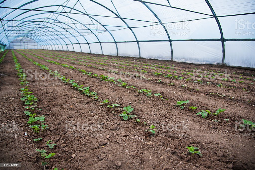 Organic greenhouse stock photo