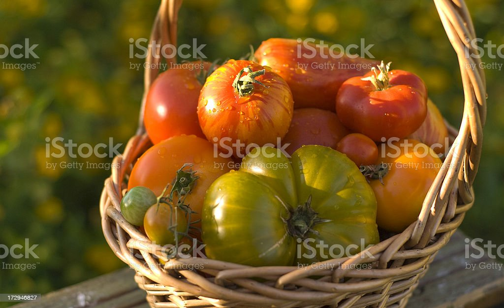 Organic Homegrown Fresh Summer Produce, Heirloom Tomatoes Vegetable Harvest royalty-free stock photo
