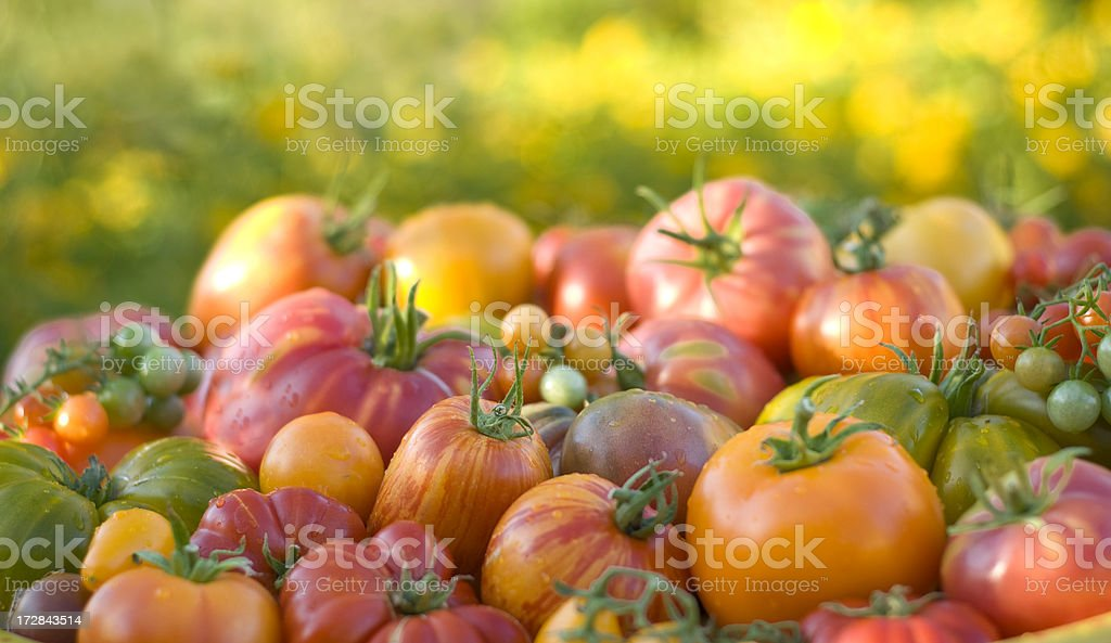 Organic Homegrown Produce Background; Heirloom Cherry Tomatoes Vegetables stock photo