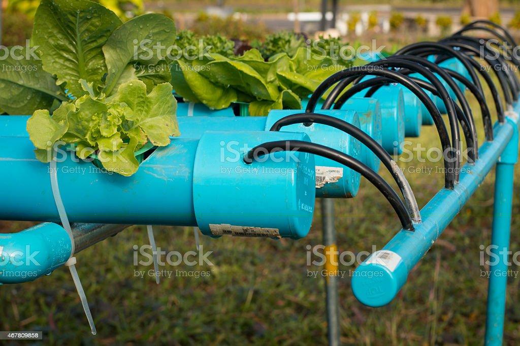 Organic hydroponic vegetable garden stock photo