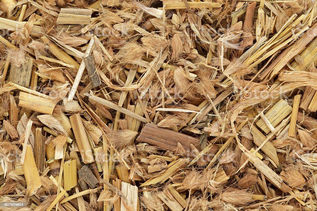 Organic Kyasuwa grass or deenanath grass (Pennisetum pedicellatum). stock photo