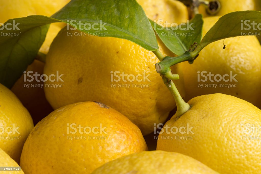 Organic lemons with leaves and stems stock photo