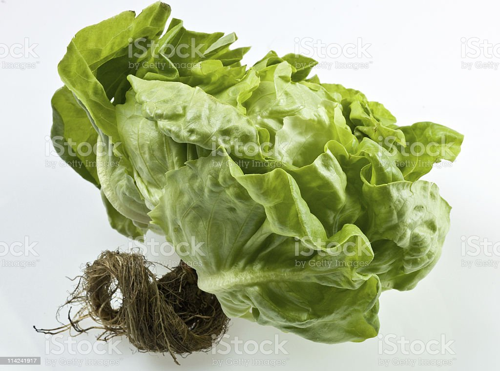 Organic living lettuce stock photo