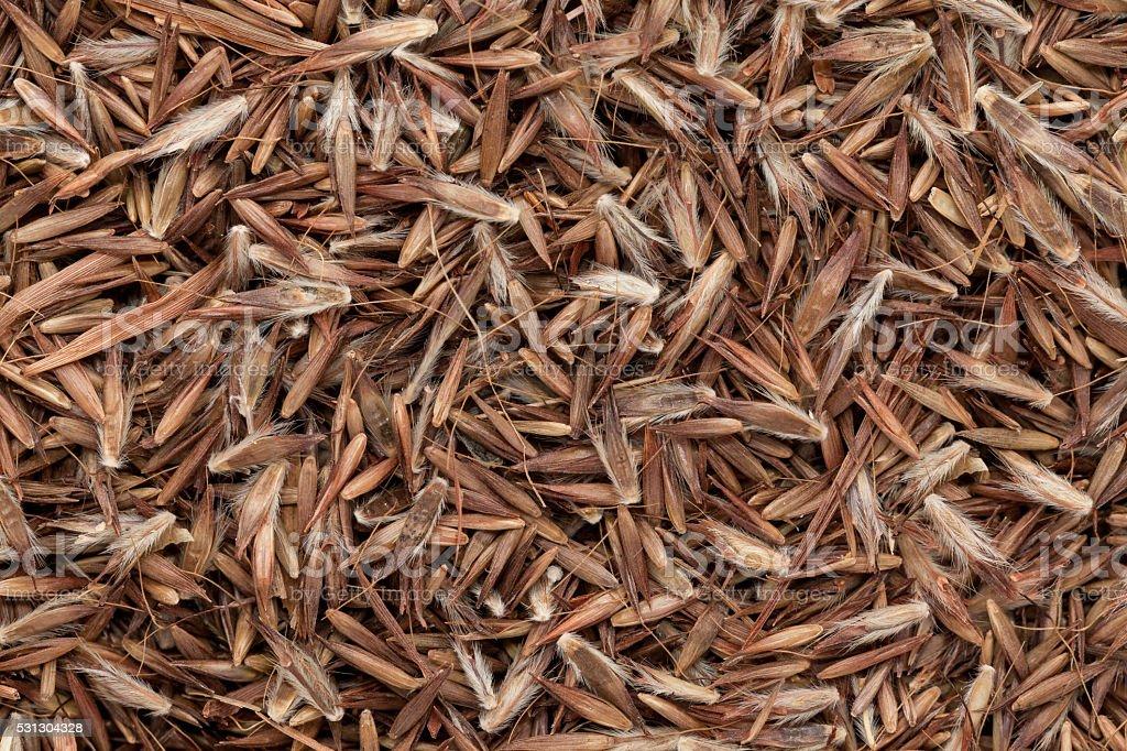 Organic Palmarosa (Cymbopogon martinii) seeds. stock photo
