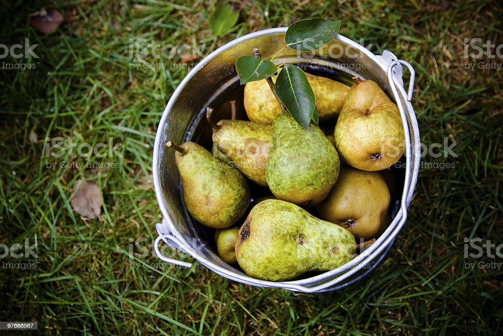 Organic pears in a bucket stock photo