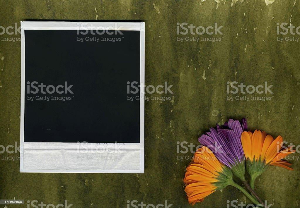 Organic Photo Vol VI royalty-free stock photo