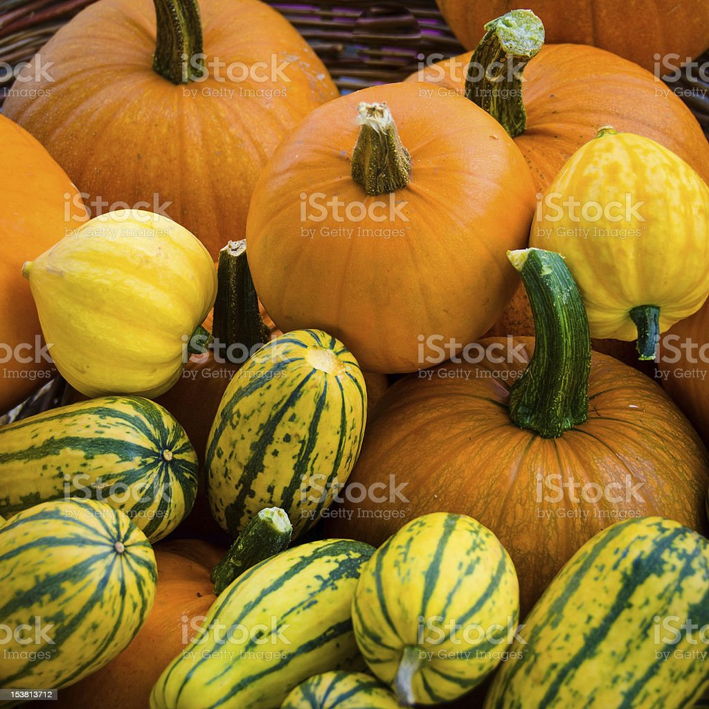 Organic pumpkins and squash stock photo