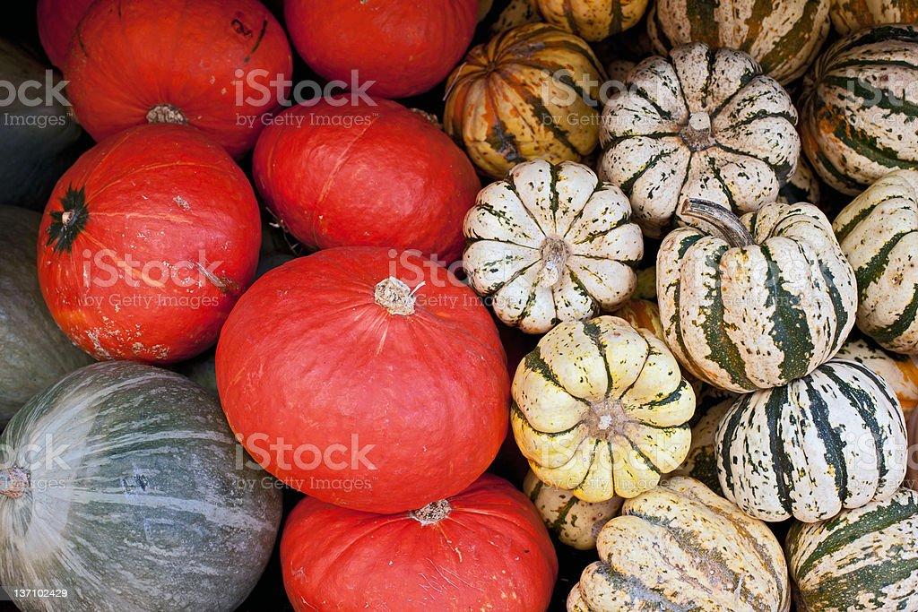 Organic Pumpkins stock photo