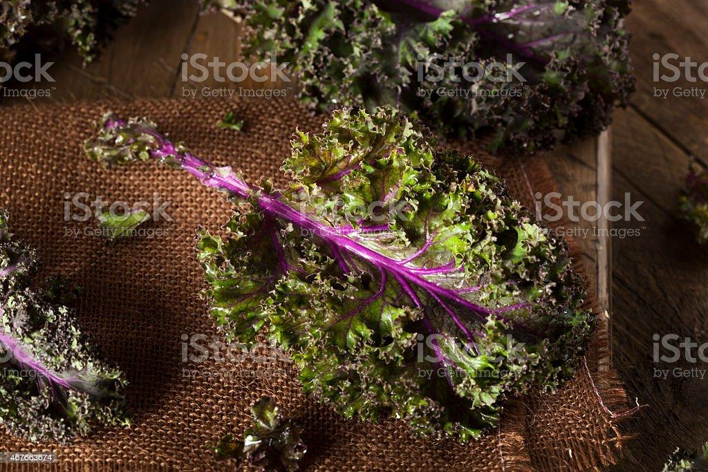 Organic Raw Red Kale stock photo