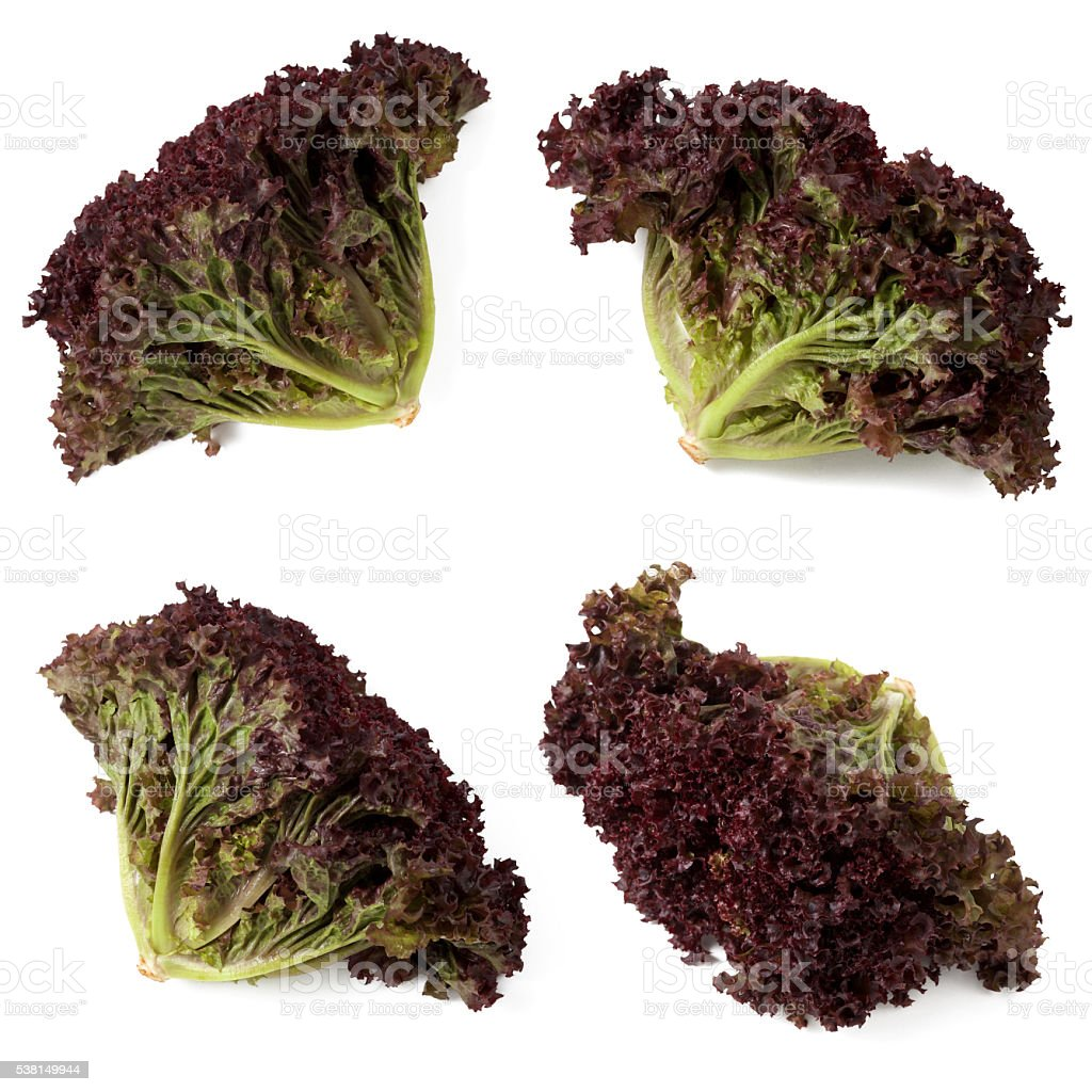 Organic red leaf lettuce collection stock photo