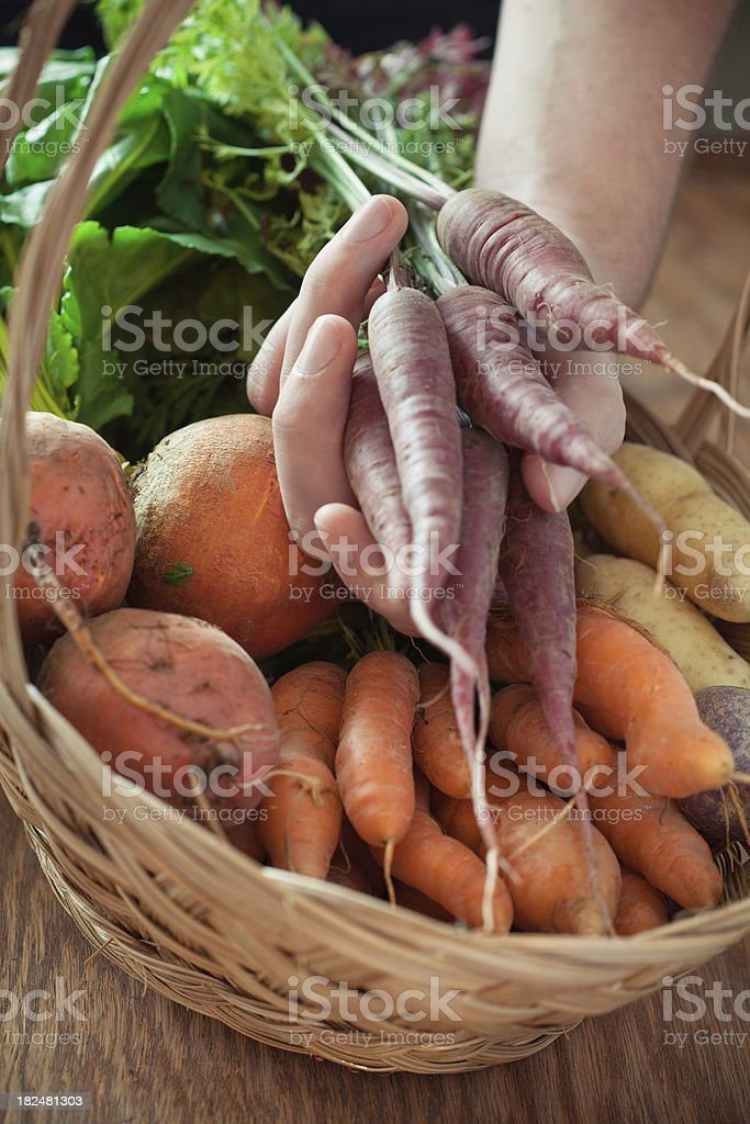 Organic Roots royalty-free stock photo