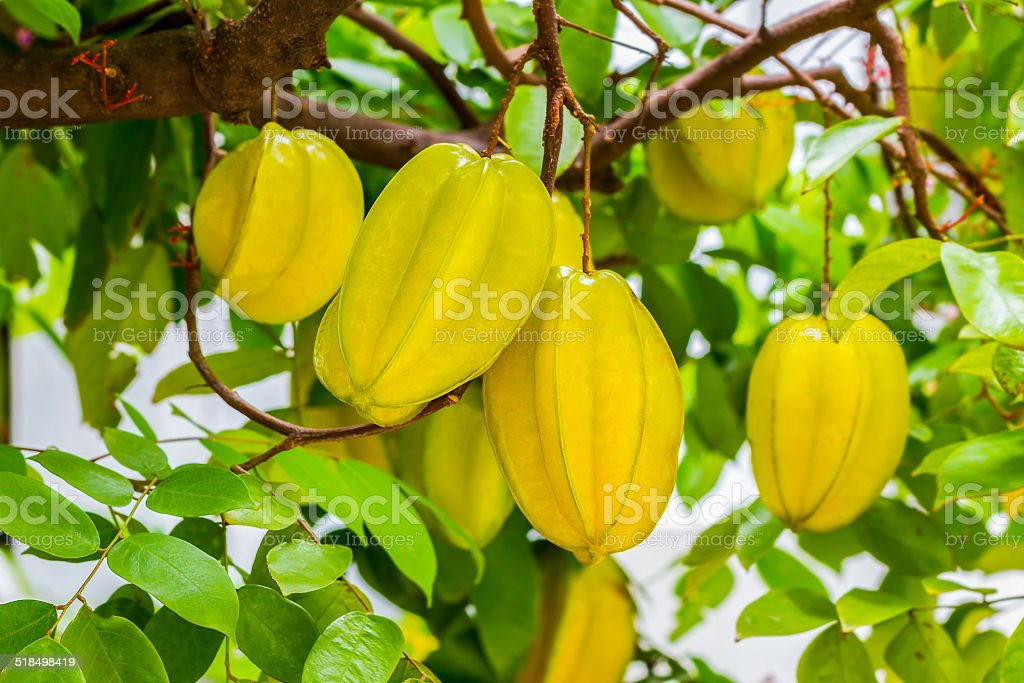 Organic Star Fruit - Thai fruit fresh farm stock photo