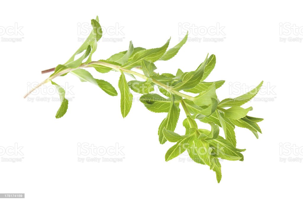 Organic tarragon royalty-free stock photo