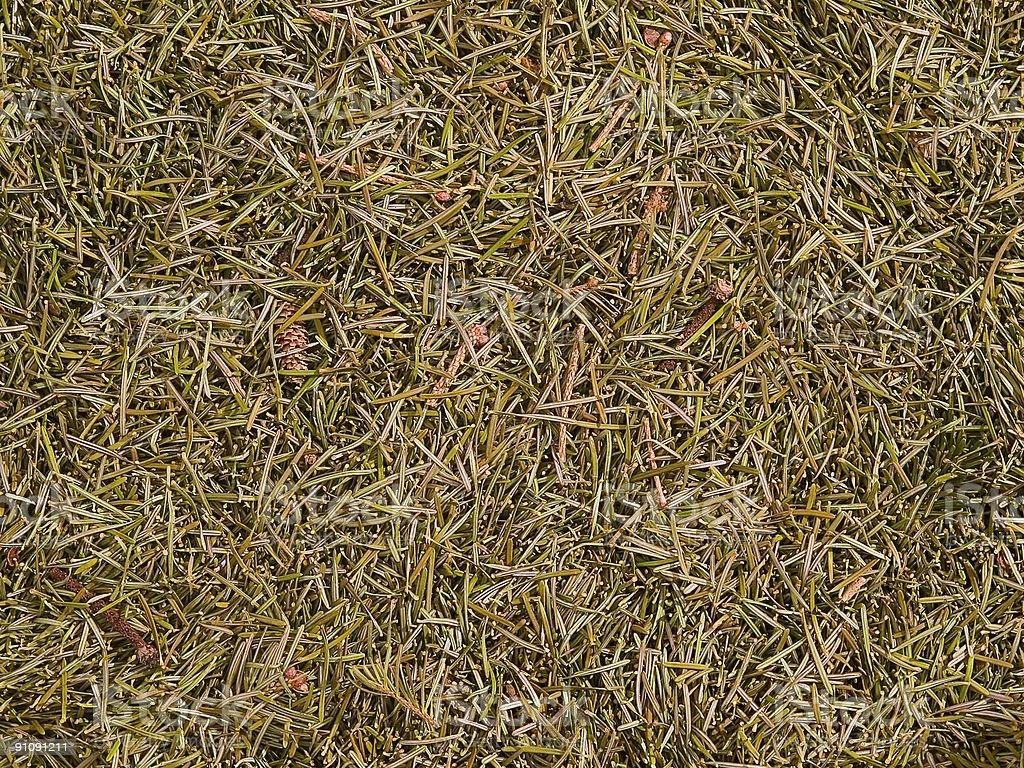 organic texture - fallen needles of fir royalty-free stock photo