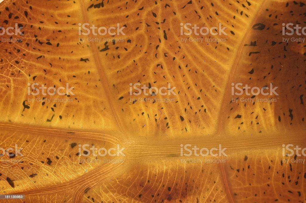Organic texture royalty-free stock photo