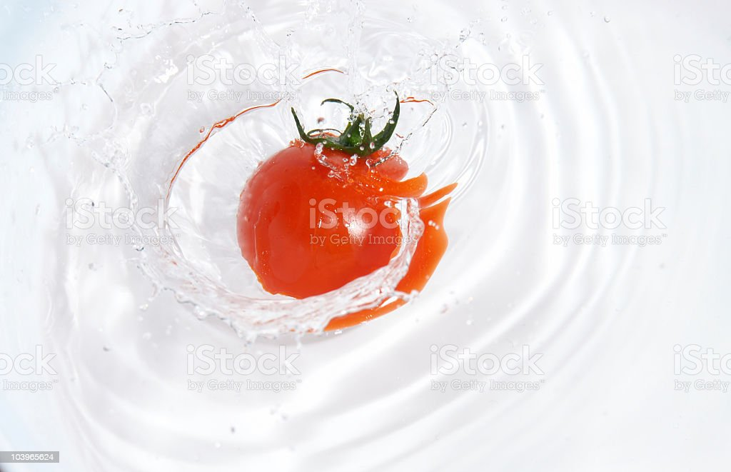 organic tomato in the water royalty-free stock photo