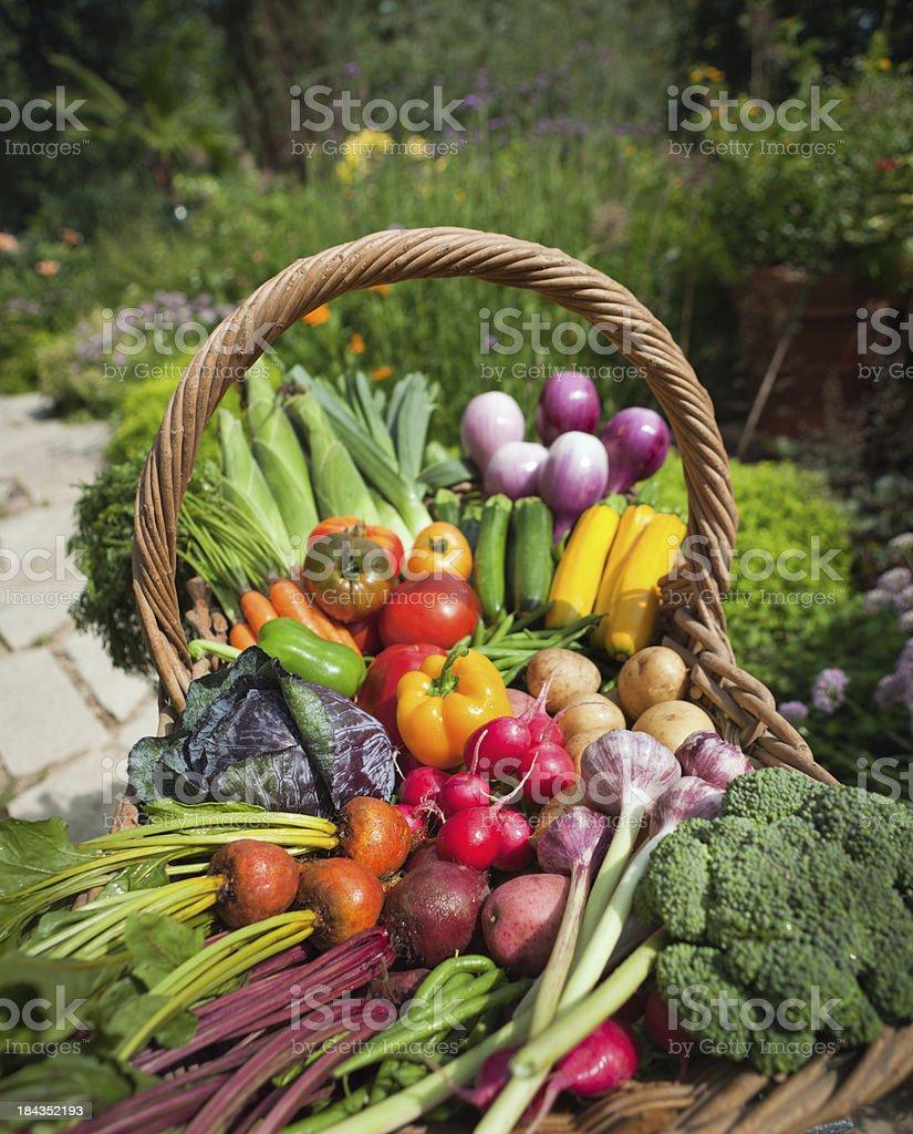 Organic Vegetable Garden Fresh Produce From Community Gardening stock photo