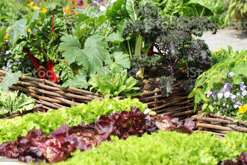 Organic Vegetable Garden stock photo