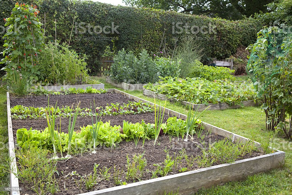 Organic Vegetable Garden royalty-free stock photo