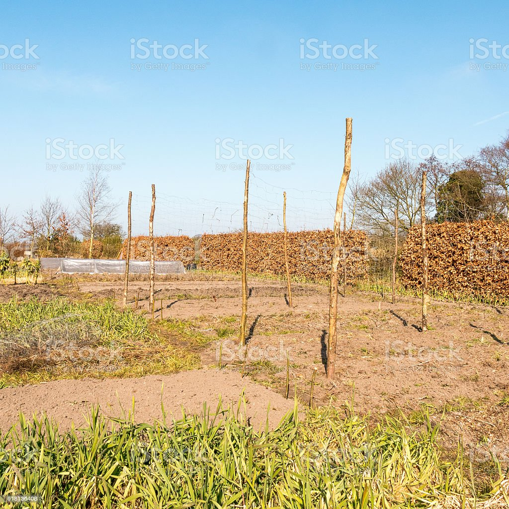 Organic vegetable garden. stock photo
